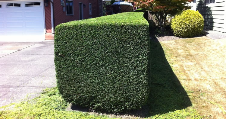 Tree and Hedge Pruning