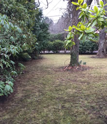 Yard and Property Clean Up